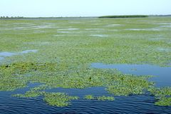 Large Landscape in Danube Delta, Tulcea, Romania. The Danube Delta (Delta Dunării) is the second largest river delta in Europe, after Volga Delta, and is the stock image