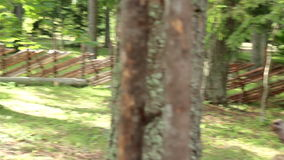 Large lath fenced area and a house under the pine trees stock video footage