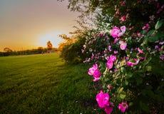 Large lawn sunset Royalty Free Stock Photo