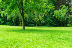 Large lawn with trees Royalty Free Stock Photography