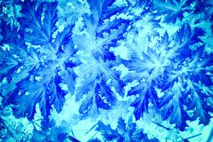 Bright blue large leaf pattern. Stock Image