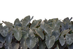 Large Leaf Cutout Stock Photo