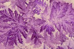 Large leaf pattern in purple and mauve. Stock Image