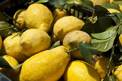 Large Lemon Royalty Free Stock Images