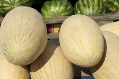 A large light yellow melon is on the counter for sale. Close-up.Cucumis melo royalty free stock photography