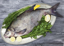 A large live bream river fish  fish lying on a on on an iron tray with a knife and slices of lemon and with salt dill Royalty Free Stock Image