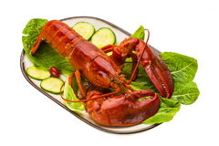 Large Lobster Stock Image