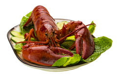 Large Lobster Stock Images
