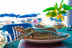 Large lobsters on a plate in a cafe Royalty Free Stock Photos