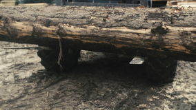 Large log loader and operations in the log yard at a conifer log mill. Sawmill industry stock video