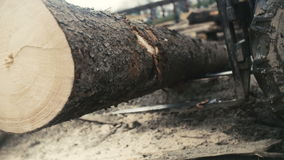 Large log loader and operations in the log yard at a conifer log mill. Sawmill industry stock footage