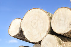 Large logs Stock Images