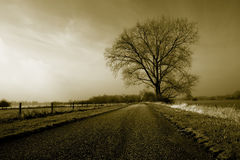 Large lonely tree stock images