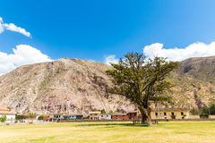 Large lonely tree in South America,PERU against blue sky Stock Images