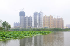 Large lotus and high rise buildings in a park Stock Image