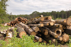 Large Lumber Pile Stock Photo