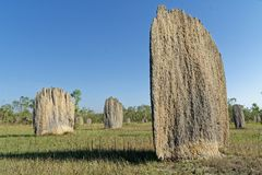 Large Magnetic Termite Mounds On The Floodplain. Numerous large Magnetic termite Amitermes meridionalis mounds left standing on the flood plains after the water stock photos
