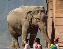 Big male elephant in Copenhagen Zoo. A large male elephant in front of visitors in the Copenhagen Zoo in Copenhagen, Denmark stock photos