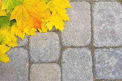 Large Maple Leaves on Paver Patio Stock Photos