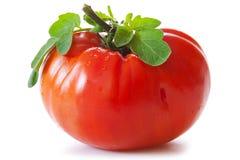 Large mature ox heart tomato. Royalty Free Stock Photo