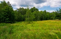 Large meadow among beech forest in summer. Beautiful scenery on a cloudy and windy day Stock Photography