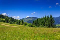 Large meadow with pine trees on the hill. In front of a mountain Royalty Free Stock Image