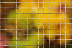 Large metal mesh. Blurred background.  Royalty Free Stock Images