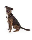 Large Mixed Breed Dog Sitting to Side Stock Photo