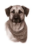 Large mixed breed dog in vintage sepia Stock Images
