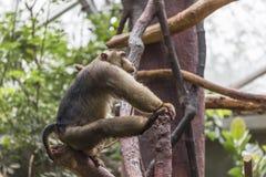 Large monkey Stock Photo