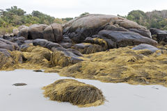 Large moss covered rocks on a sandy beach. Royalty Free Stock Photos