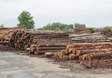 A large mountain of timber logs prepared for export, wood and beam stock photography