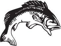 Large Mouth Bass Illustration. Line Art Illustration of a Large Mouth Bass stock illustration