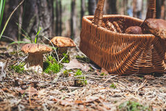 Large mushrooms and wicker basket in forest glade Stock Photos