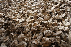 Large mussls Stock Photography