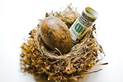 Large Nest Egg. A bird's nest with a large brown egg and a 100 dollar bill. Financial concept or metaphor stock photo