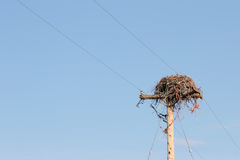 Large nest on utility pole. Large bird nest on utility pole Royalty Free Stock Image
