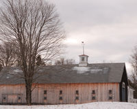 Large New England brown wood barn with white cupola on a cold dark late January day. Multiple multi-pane windows in 2 rows, light brown barn sides, dark brown royalty free stock images