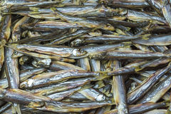 A large number of dried fish, top view. Stock Image
