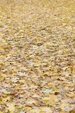 A large number of fallen and yellowed autumn leaves on the ground. Autumn background texture stock images