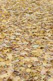 A large number of fallen and yellowed autumn leaves on the ground. Autumn background texture royalty free stock images