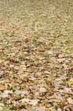 A large number of fallen and yellowed autumn leaves on the ground. Autumn background texture stock photo
