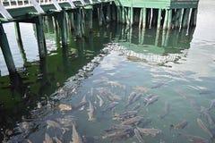 A large number of Fish is found at Mansar Lake Jammu