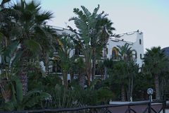 Large number of palm trees hide facade of the hotel. Marina di Patti. Sicily Stock Photos