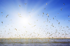 A large number of seagulls flying over the sea surface. Stock Image