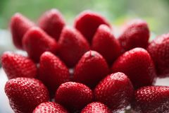 A large number of strawberries. Lots of healthy strawberries stock photography