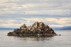 Large number of  various birds roost on large rock Stock Image