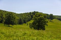 Large oak tree Royalty Free Stock Image