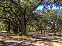 Large oak trees in New Orleans Royalty Free Stock Photo