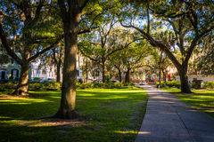 Large oak trees and spanish moss along a path in Forsyth Park, S Stock Image